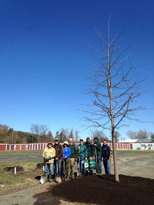 whole-tree_5983-700